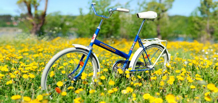 Bicycle in field of yellow flowers